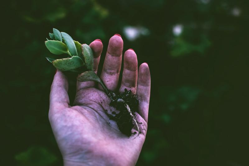 Hand som håller i en liten planta med jord på
