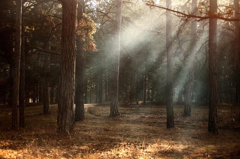 I skogen hittar vi kraft. Solen lyser in bland träden.