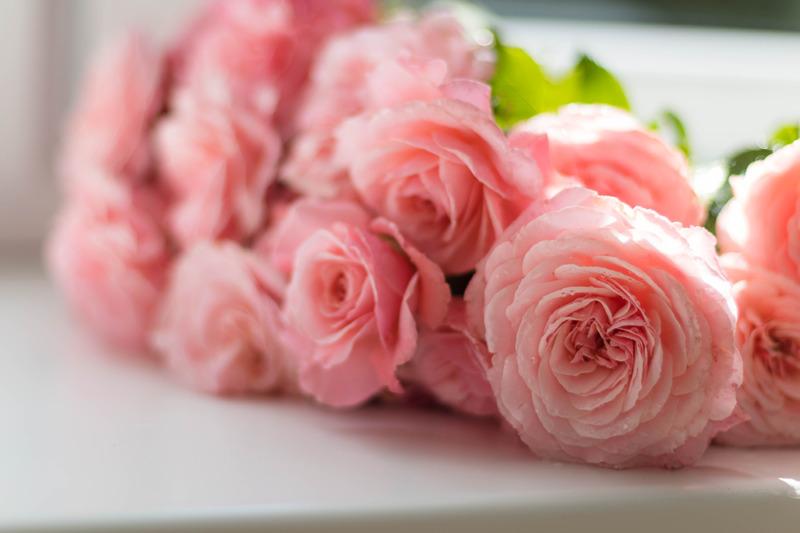 möhippa, rosa rosor