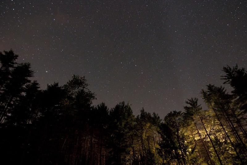 Stjärnklar natt över skogen.