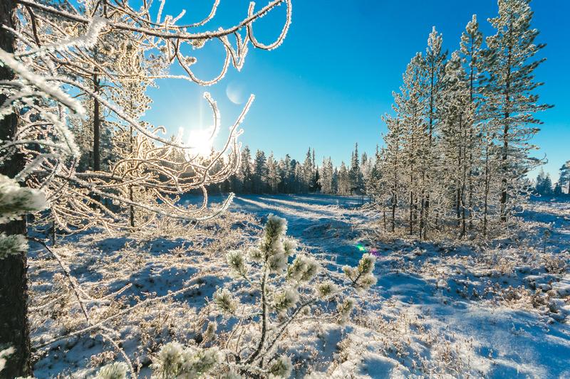 vinterlandskap, gnistrande snö och blå himmel